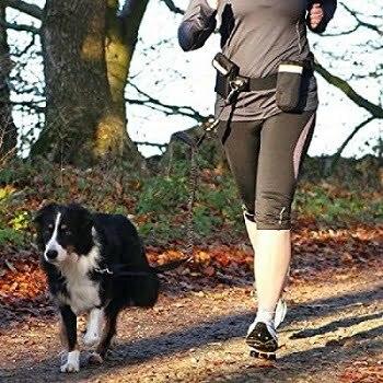 beste heupgordel hardlopen hond